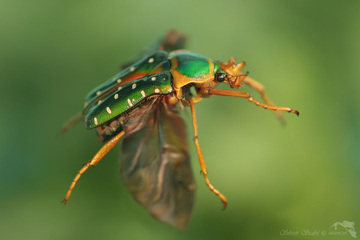 Hmyz01 1200x800